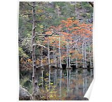 Autumn In The Cypress Swamp Poster