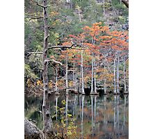 Autumn In The Cypress Swamp Photographic Print