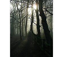 Eery Woodland in Surrey Photographic Print