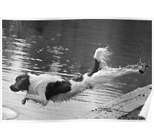 The Diving Spaniel Poster