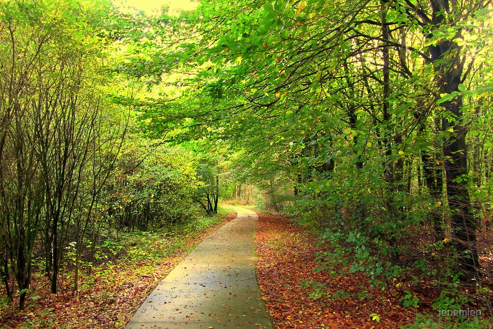 A little Road in Autumn by ienemien