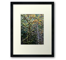 Magic Woods Framed Print