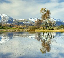 Wise Een....Autumn Snow by Jamie  Green