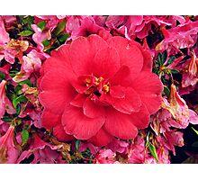 Vibrant flower Photographic Print