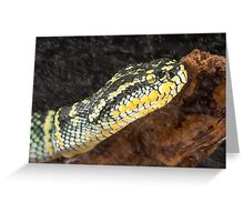 Pit viper in the rain Greeting Card