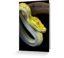Juvenile Green tree python Greeting Card