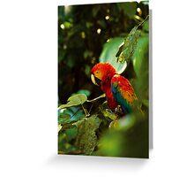 Ecuador Scarlet Macaw Greeting Card