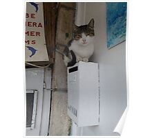 Cat on a postbox Poster