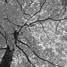 Cranberry Woods 1 by Paul Kavsak