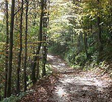 Clapham Woodland Walk by Paul Swift