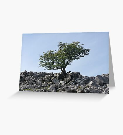 Limestone Pavement Lone Tree Greeting Card