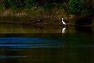 Great Egret on the Bega River by Yukondick