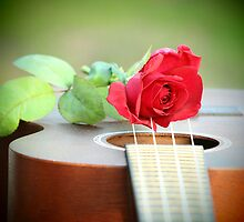 Rose on Ukelele by scolacr
