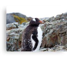Penguin Chick Canvas Print