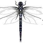 Hawker dragonfly by sciencefluff