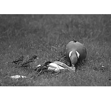 The Pigeon And The Sparrows Photographic Print