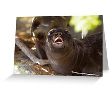 Sea Lion Neonate with Mother Greeting Card