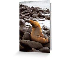 Galagapos Fur Seal Greeting Card