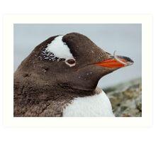 Penguin Detail Art Print