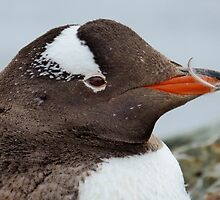 Penguin Detail by mischif