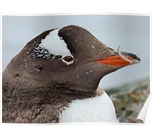 Penguin Detail Poster