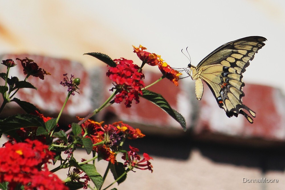 Swallowtail Butterfly..... by DonnaMoore