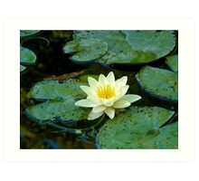 Waterlily   Giverny, France Art Print