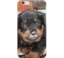 Messy Rottweiler Puppy With Food Covering Nose iPhone Case/Skin