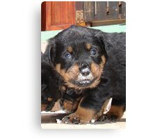 Messy Rottweiler Puppy With Food Covering Nose Canvas Print