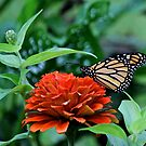 Zinnia and Monarch by Rose Landry