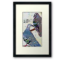 Bronzewings Framed Print