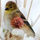 Winter Feast by Arla M. Ruggles