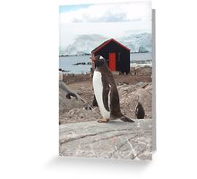 Penguin Post Office Greeting Card