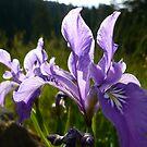 Flowers by Jess Meacham