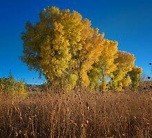 Rising Yellow by Bob Larson
