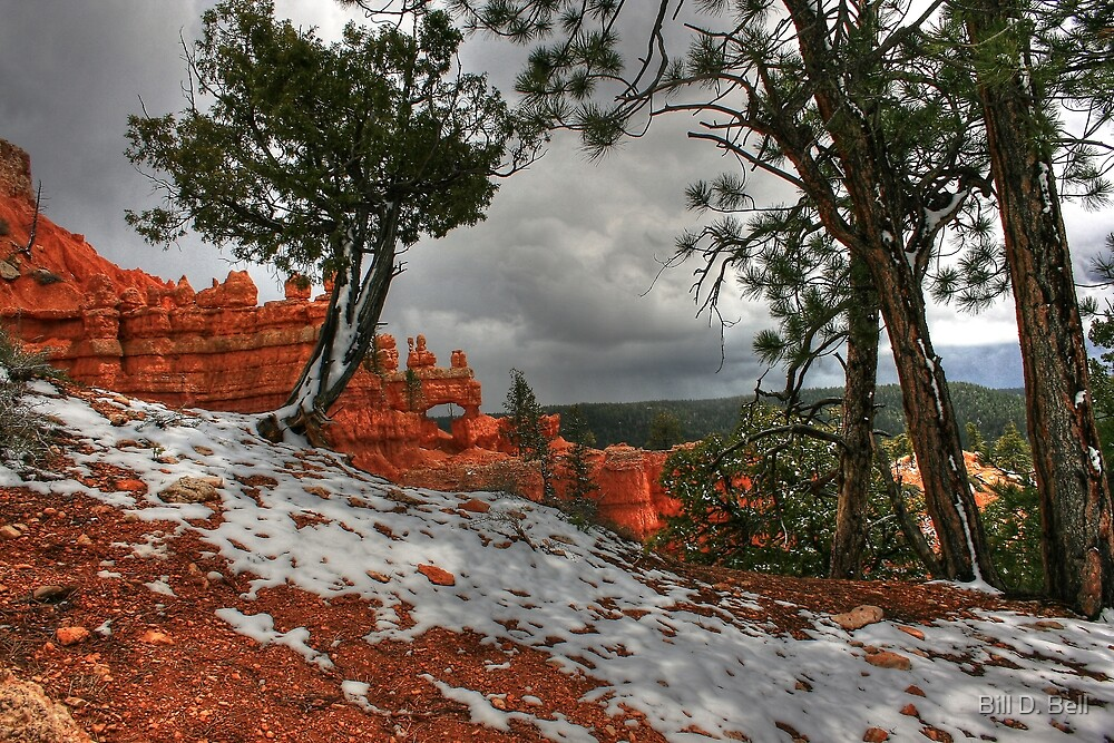 First Snow by Bill D. Bell