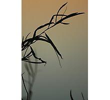 Fall Foliage Photographic Print
