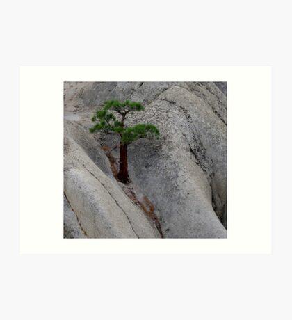 Rock Growing Tree Art Print