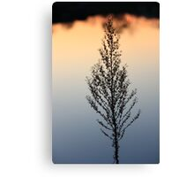 A Sunset Lake reflection Plant Silhuette,,,, Canvas Print