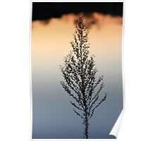 A Sunset Lake reflection Plant Silhuette,,,, Poster