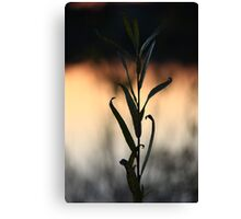 Leafy Sunset Canvas Print