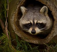 Knock Knock! ...... Who's There? by Jeff Weymier
