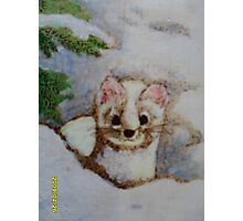 White weasel, white snow Photographic Print
