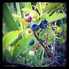 BlueBerry YumYum by LivvyP