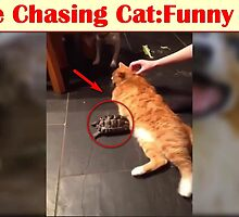 Turtle Chasing Cat: Funny Video  by mustwatchvideos