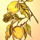 Lemons. Pen and wash. Framed. 42x32cm by Elizabeth Moore Golding
