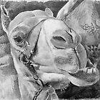 Camelface. by Bianca Ferrando