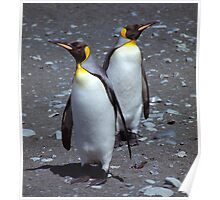 Stand-off!! King Penguins, Macquarie Island Poster