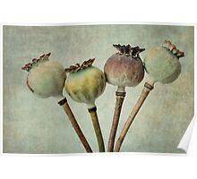 Poppy pods Poster