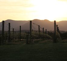 vineyard sunrise by Adam Thomson